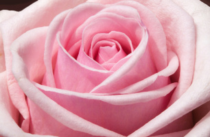 Månadens ros