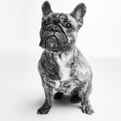 Stella Furberg's profile picture