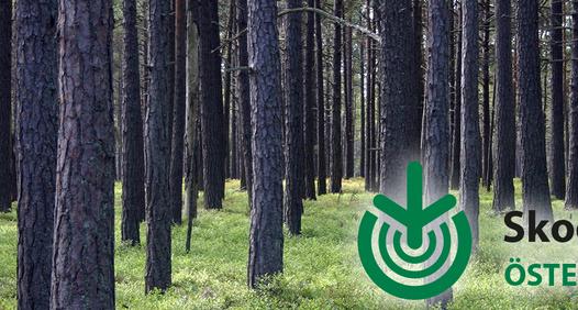 Omslagsbild för Skogsägaren