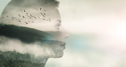 Dokumentära Berättelser's cover image