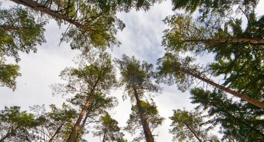 Omslagsbild för Land Skogsbruk