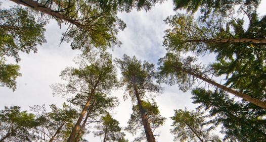 Land Skogsbruk's cover image