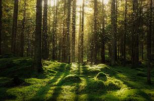 Vecka 45: Skog, jord & mark