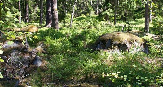 Skogsägaren's cover image