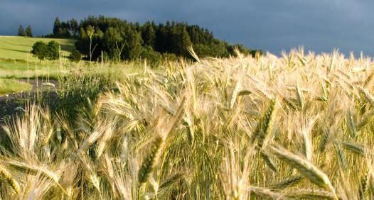 Omslagsbild för Norsk Landbruk