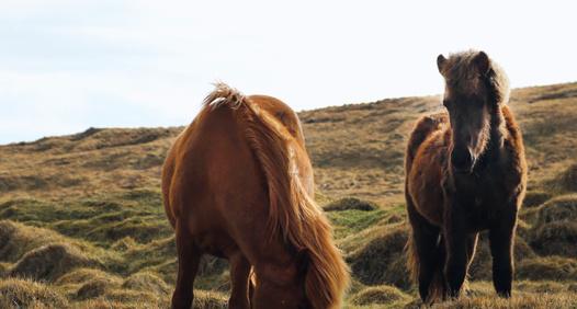 heste-nettet.dk's cover image