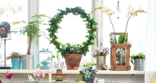 Omslagsbild för Drömhem & Trädgård